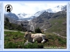 valle-dei-forni_010