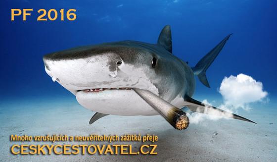 Bahamas, Tiger Beach, Tiger shark (Galeocerdo cuvier) underwater