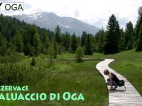 Paluaccio_01