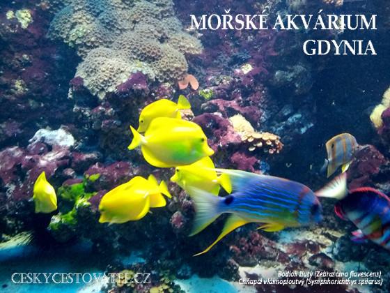 akvariumgdynia-01