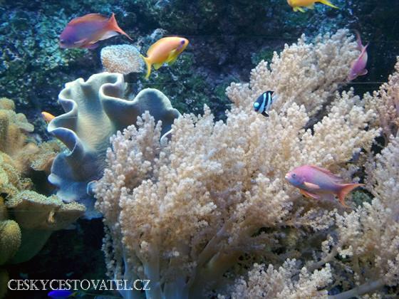 akvariumgdynia-02
